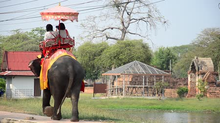 運輸 : Foreigner and Traveler riding elephant for tour around  Ayutthaya ancient city at Thailand 影像素材