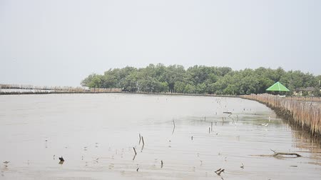 intertidal : Birds in Mangrove forest or Intertidal forest at Bangkhunthein in Bangkok Thailand.
