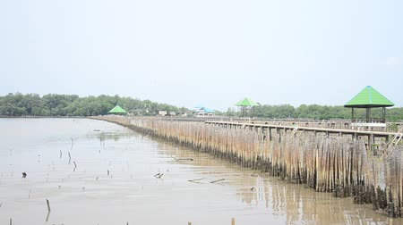 intertidal : Mangrove forest or Intertidal forest at Bangkhunthein in Bangkok Thailand.