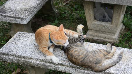 lying cat : Thai domestic cats playing on table in garden