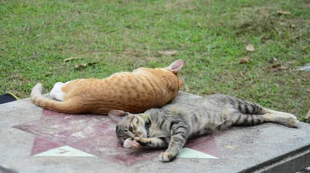 cat bowl : Thai domestic cats playing on table in garden