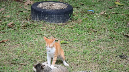 cat bowl : Thai domestic cats playing in garden