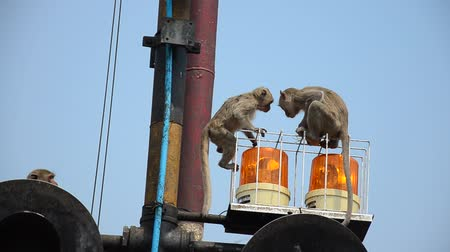 syrena : Monkeys playing on siren light of railway train near Phra Prang Samyod on Lopburi, Thailand