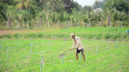 bahçıvan : Old man 60 year old use hoe digging land for plantation at garden in morning time in Phatthalung, Thailand.
