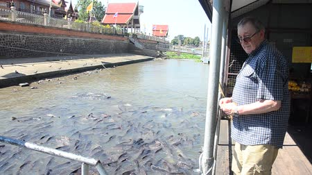 German old man feeding food to Iridescent shark or Pangasianodon hypophthalmus fish at Chao Phraya river in Ayutthaya, Thailand Stock mozgókép