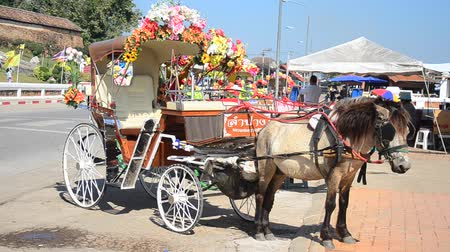 cavalo vapor : Horses drawn carriage waiting travelers people use service tour around city at Wat Phra That Lampang Luang Buddhist Temple in Lampang, Thailand
