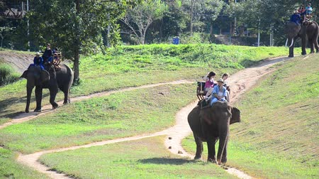 Thai man people mahout riding elephants service traveler and bring people tour forest at Thai Elephant Conservation Center Lampang, Hang Chat in Lampang, Thailand. Stok Video