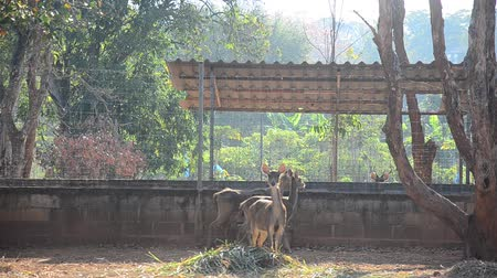 geyik : Deers in cage at morning time