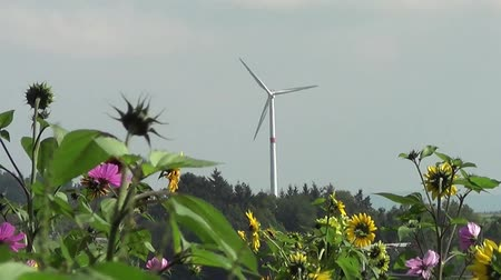 renovável : flowers in front of wind turbine