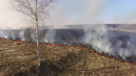 bionomics : The camera is moving over the big meadow. The last years meadow burns dry grass.