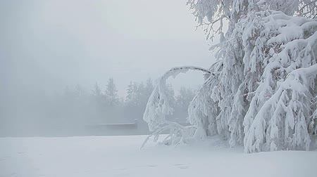 kar fırtınası : Snowdrifts in winter forest with vapor from warm lake, Karelia, Russia
