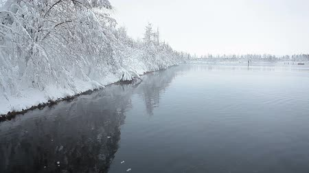 margem do rio : Meltwater pool in Karelia forest with frozen trees on bank, Russia