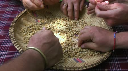 sifting : Raw coffee beans cleaning with hands. Arusha coffee plantation, Tanzania, Africa Stock Footage