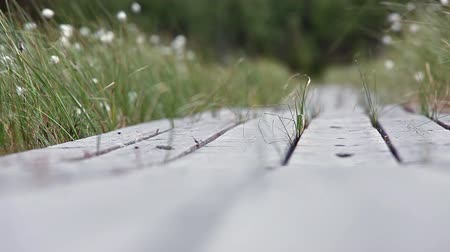 лесоматериалы : Close up view of wooden planks road in swamp of Karelia, Russia