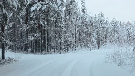 jeges : Camera moving on winter forest road in evergreen woods of Karelia, Russia Stock mozgókép
