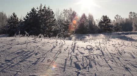 winter place : Long shadows from plants sticking snow on field at sunset sun light, winter landscape Stock Footage