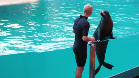 manges : PUERTO DE LA CRUZ, TENERIFE, SPAIN - CIRCA JAN 2015: Animal trainer asks sea lion to pronounce some sound and to sing the song. Sea Lion Show is in the Loro Parque the largest zoo in Europe