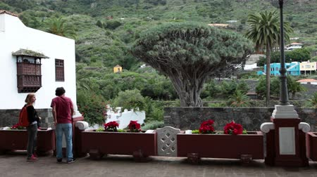 marcos : ICOD DE LOS VINOS, TENERIFE, SPAIN - JAN, 9, 2016: Young couple looking at the Dragon tree from area of ??the Iglesia Mayor de San Marcos church. Dracaena draco tree is a thousand-year-old tree