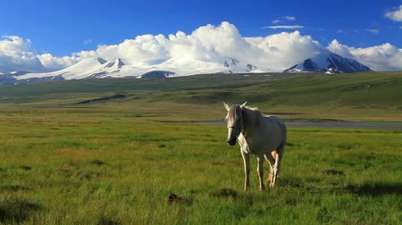 padok : White horse on a green meadow in mountains Stok Video