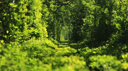 известное место : Beautiful tunnel of green trees . Tunnel of love. Old abandoned railway line, in the alley of green trees. Стоковые видеозаписи