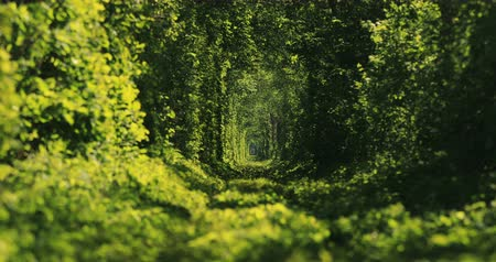 passagem : Beautiful tunnel of green trees . Tunnel of love. Old abandoned railway line, in the alley of green trees. Vídeos