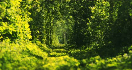 conhecido : Beautiful tunnel of green trees . Tunnel of love. Old abandoned railway line, in the alley of green trees. Vídeos