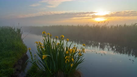 rémület : Misty dawn on the river bank with beautiful flowers Stock mozgókép