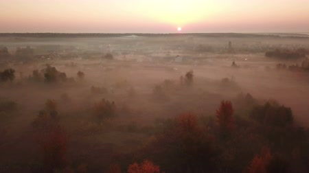 Autumn forest in the fog at sunrise. Drone footage. Vídeos