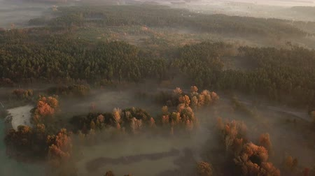 Autumn forest in the fog at sunrise. Drone footage. Стоковые видеозаписи