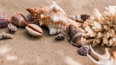 istiridye : Sea shells with sand as background. Summer beach. Stok Video