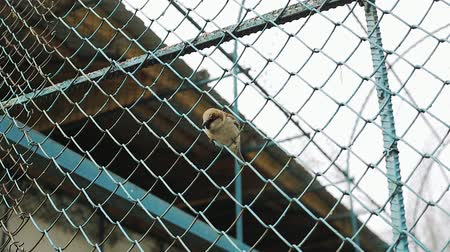 passer by : Bird sparrow in the steel grating.