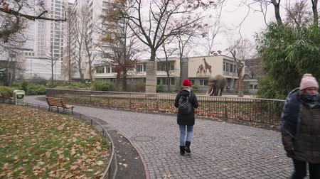 BERLIN, GERMANY - NOV 23, 2018: Female photographer takes pictures of a large gray elephant in a zoo.