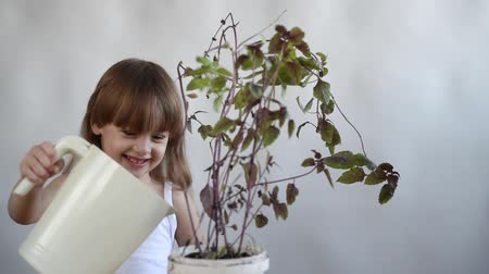 aguado : Little girl is watering basil, touching a leaf and smelling it