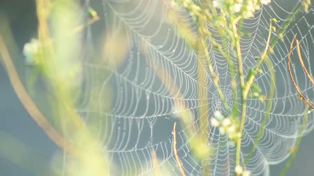 spider web : Beautiful spider web with droplets daytime outdoors