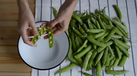 casco : womans hand taking fresh ripe green pea bean from heap on striped napkin, shelling, putting peas into metal bowl pod husk on wood table, top view of closeup full hd stock video footage in real time