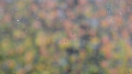 özlem : water droplet on window glass with blurred colorful autumn leaves background in bad rainy weather after rain, closeup full HD stock video footage in real-time