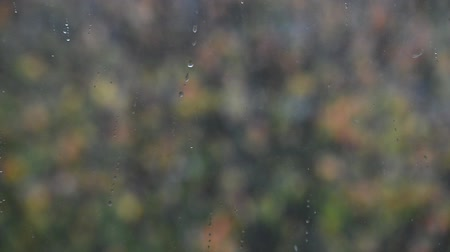 milza : blurry falling first autumn snow outside home window on colorful trees background, close up full HD stock video footage in real-time Filmati Stock