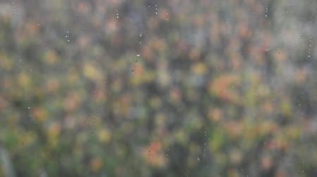 özlem : blurry falling first autumn snow outside home window on colorful trees background, close up full HD stock video footage in real-time Stok Video