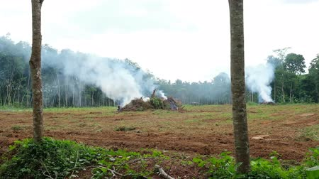 отменить : Smoke from burned old trees.Preparing from new plantation concept