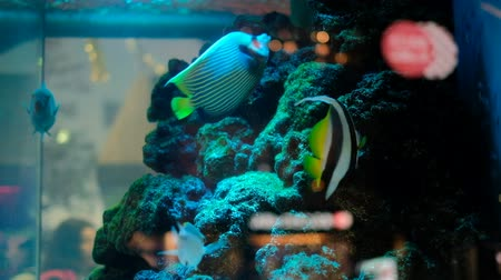 mohás : Colorful fish in beautiful aquarium