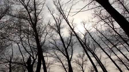 natura : clouds behind the trees in the forest (Time Lapse) Wideo