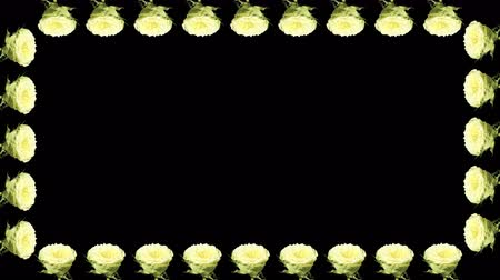 çerçeveler : 4K. Frame of blooming roses time-lapse with alpha matte, Full HD, 4096x2304.