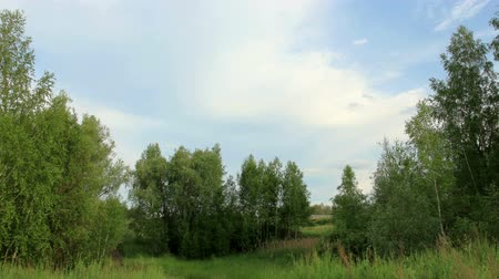 peaceful : Movement of clouds over the meadow. Syropyatskoe village, Kormilovsky District, Omsk Region, Russia, Full HD Stock Footage