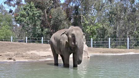 elefante : Elephant in water in the zoo