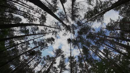 çevre : Timelapse in the summer forest with tree trunk and cloudy sky