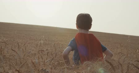 bravery : Young boy wearing a superhero cape standing in a golden wheat during sunset