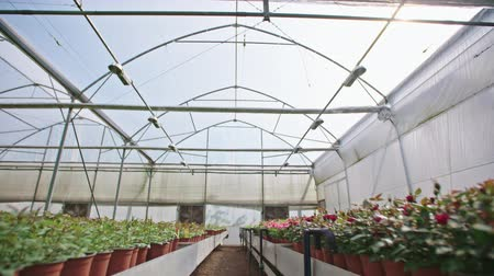 brotos : Wide tracking shot of a large flower greenhouse