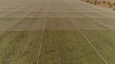 hand crafted : Aerial footage of net houses with grape vineyard Stock Footage