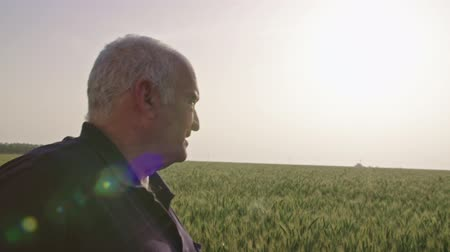 agronomist : Steadycam shot of an old farmer walking in a green wheat field Stock Footage