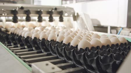 egg sorting : Machine sorting fresh eggs in a chicken farm